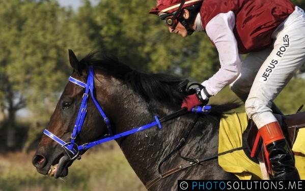 Dubai Horse Racing @ Jebel Ali Racecourse